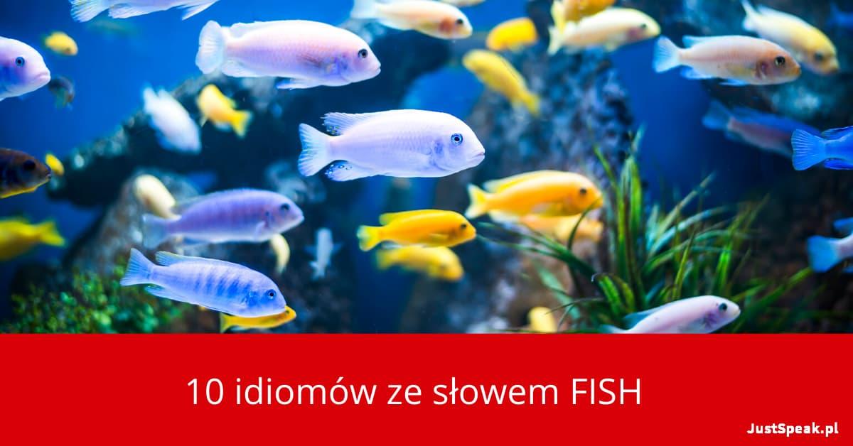 10 idiomów ze słowem FISH